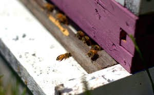 tips on bee keeping