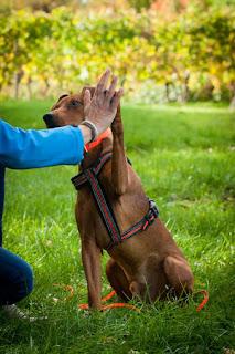 interação com cães