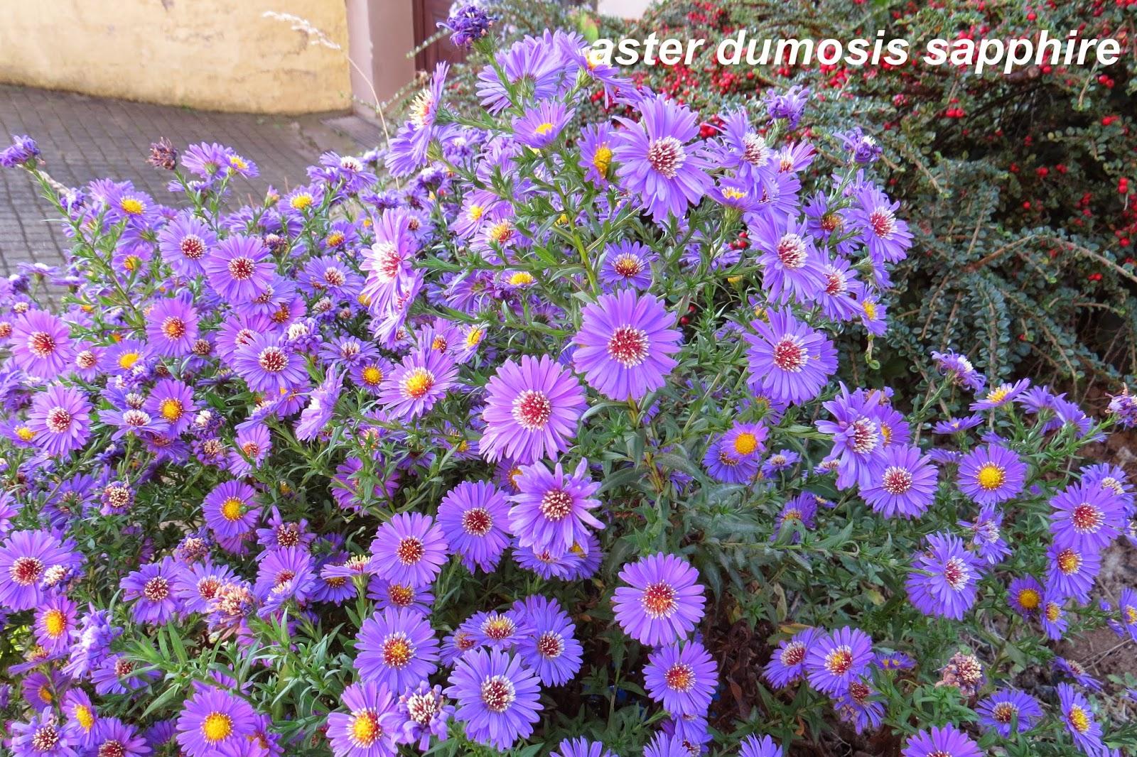 Jardin alsace vignoble for Plantes fleuries vivaces