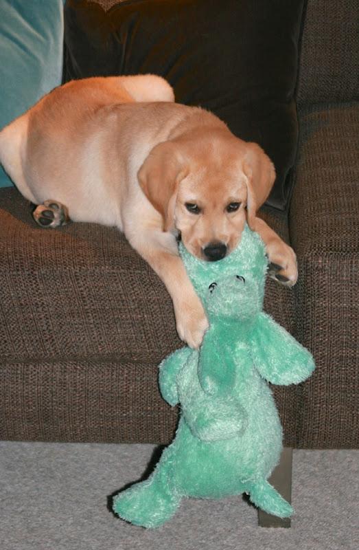 Labrador puppy Cooper toy