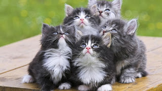 http://prazdnichnymir.ru/ Интересные факты о кошках