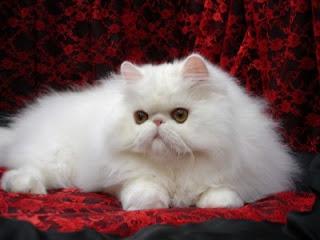 Salon Kucing Bandung