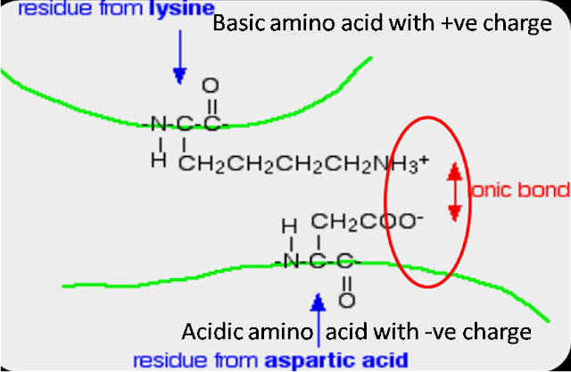 How is ionic bond formed in protein