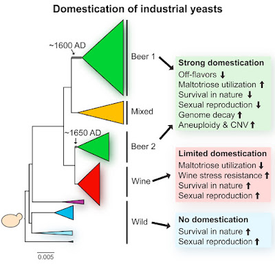 Domestication of industrial yeasts