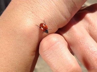 the cutest little bug on people's hand