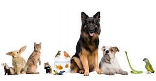 Crean Instituto de Atención Animal de la Ciudad de México