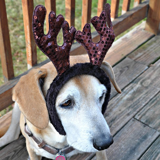 rescued senior hound dog with christmas antlers