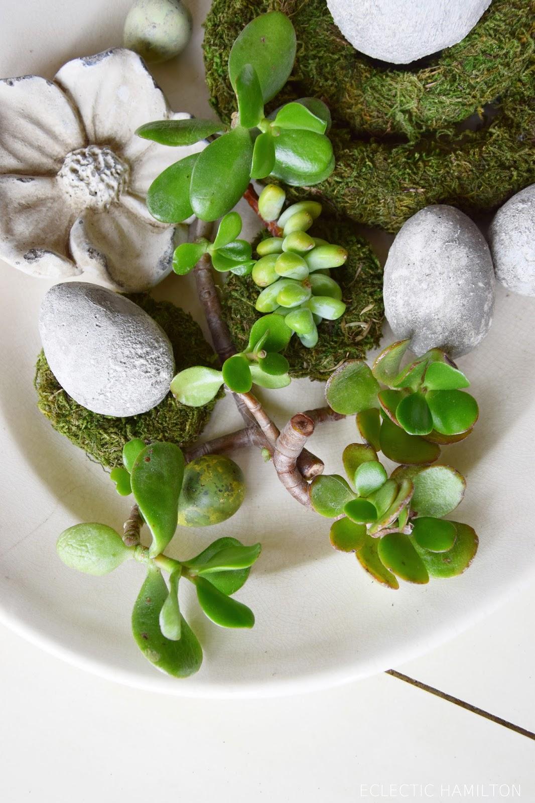 Seerosen Pflanzen Ohne Erde seerosen im gartenteich pflanzen pflegeanleitung und tipps