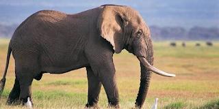 Sejarah Tahun Gajah bagian kedua