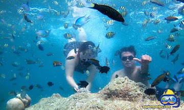 paket wisata pulau kelapa dan pulau dolphin