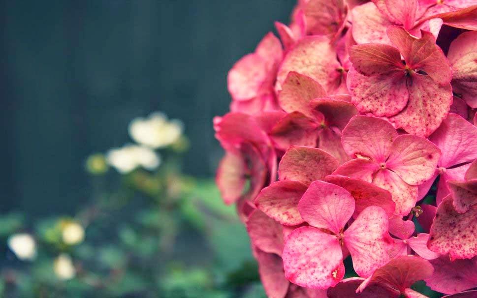 flower-wallpaper-ball-pink-flowers