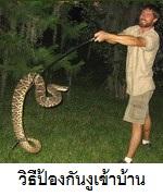 วิธีป้องกันงูเข้าบ้าน