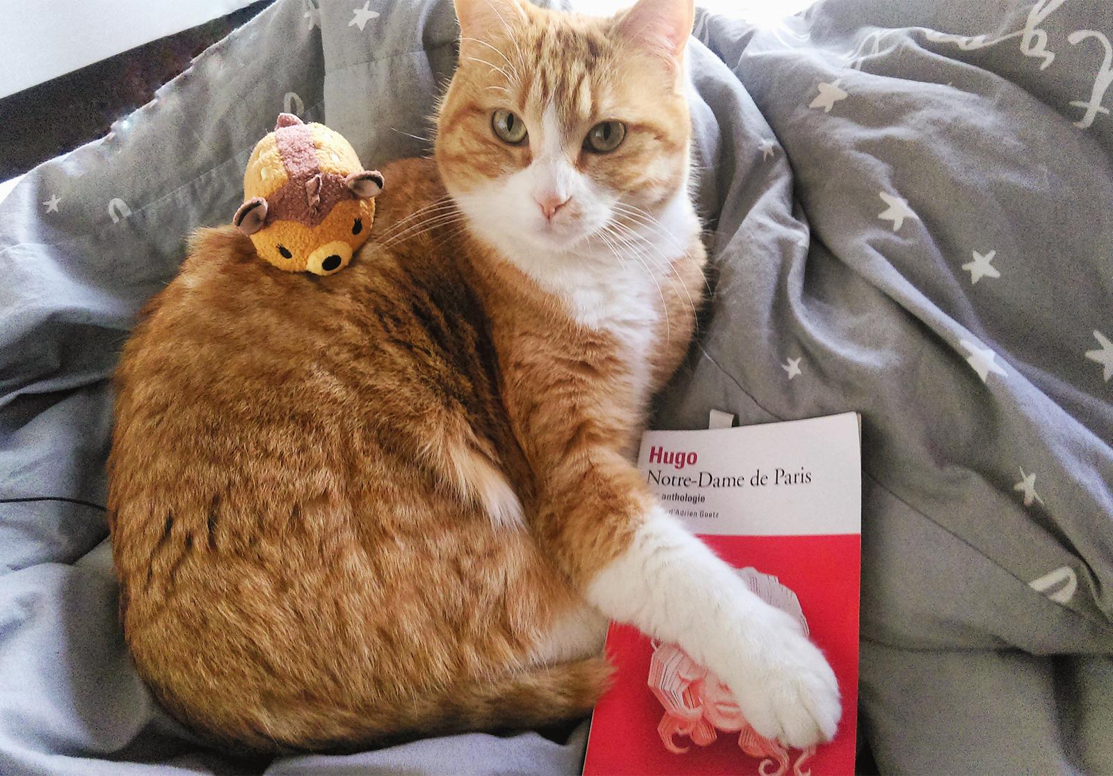 Notre-Dame de Paris éditions Folio chat tsum tsum livre Coin des licornes Blogueuses littéraires Toulouse