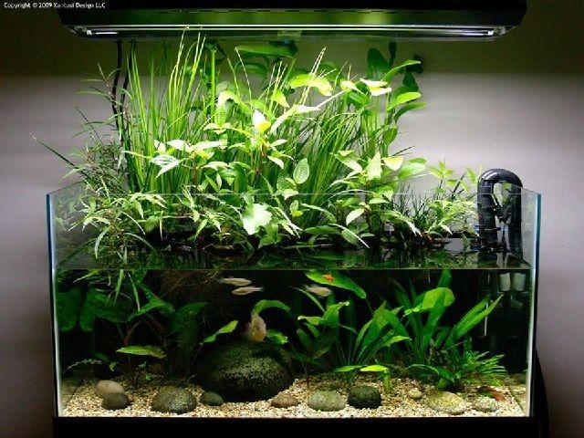 Bentuk Aquarium Hias