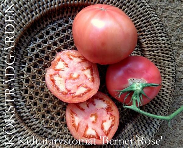 Tomato Berner Rose
