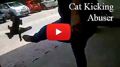 Watch this Akron man abuse a cat by kicking her hard into the parked cars via geniushowto.blogspot.com animal cruelty videos