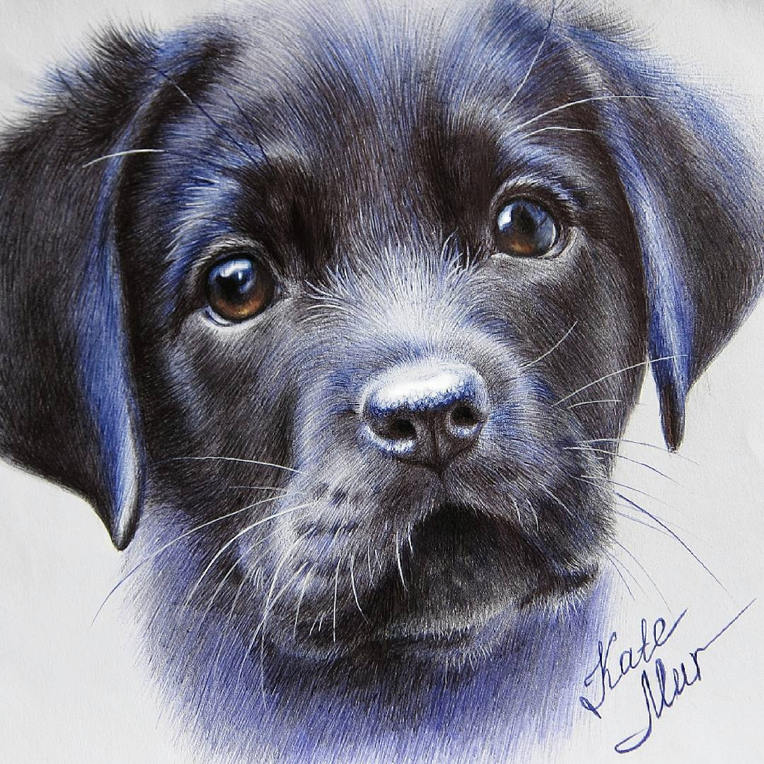 05-Black-Puppy-Kate-Mur-Fantasy-and-Realism-in-Paintings-and-drawings-of-animals-www-designstack-co