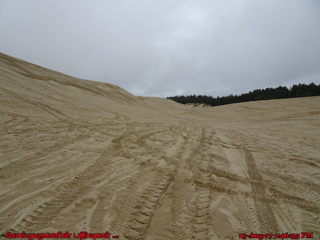 Siuslaw National Forest Sand Dunes