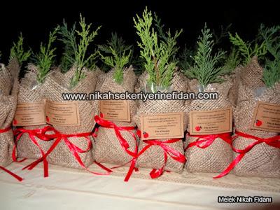 İstanbul filiz Serkan nikah bitkisi fidanı - 4