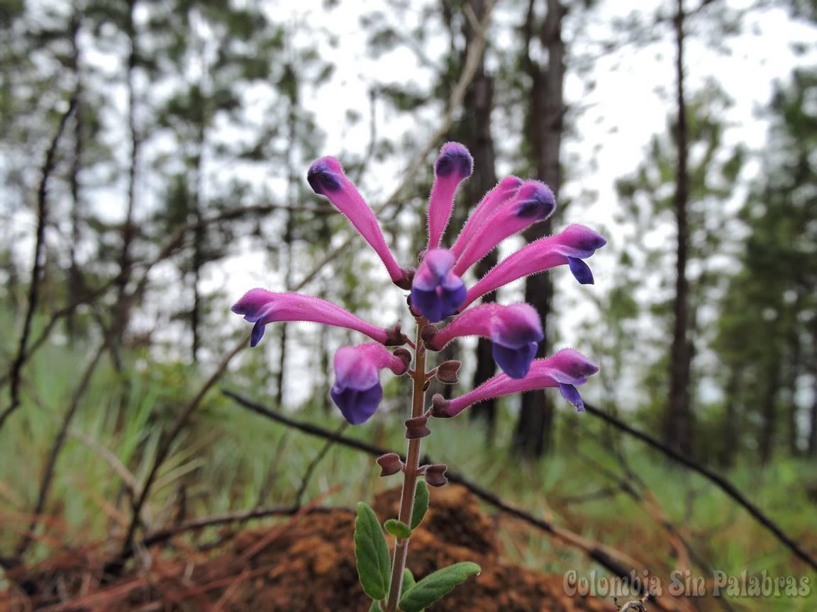 flor en el cerro quitasol