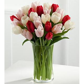 bunga tulip22