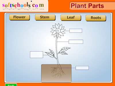 http://www.softschools.com/science/plants/plant_parts/