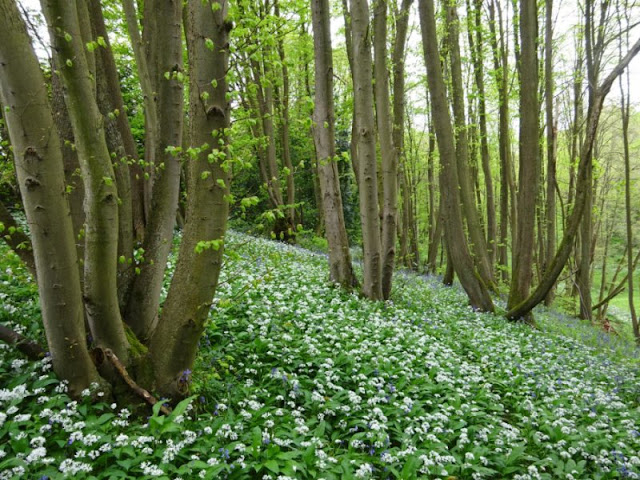 Historic cultural records inform scientific perspectives on woodland uses