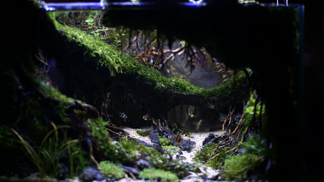 salah satu aquarium aquascape yang dipajang