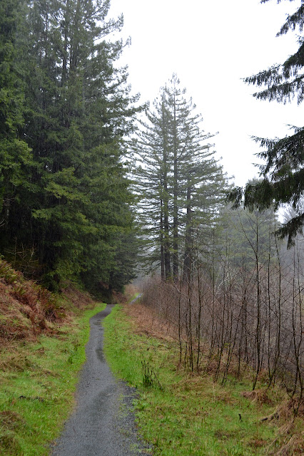 gravel path and redwoods
