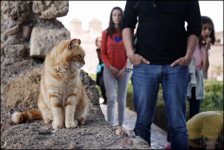 alcazaba,gato,almeria,gente