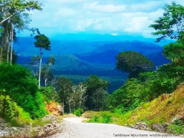Birding tour in rainforest of Indonesia