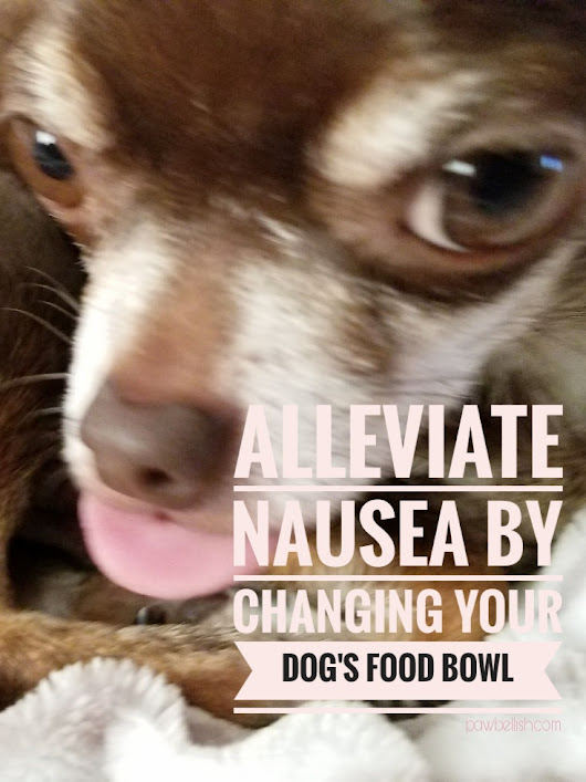Nausea In Dogs: How Changing Their Food Bowl Helps