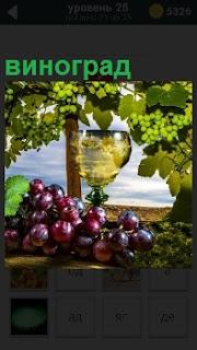Рюмка с вином, грозди винограда на фоне виноградных плантаций и голобого неба над ними