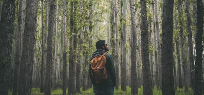 Kesesat Di Hutan