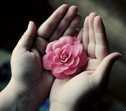 Mãos oferecendo uma rosa