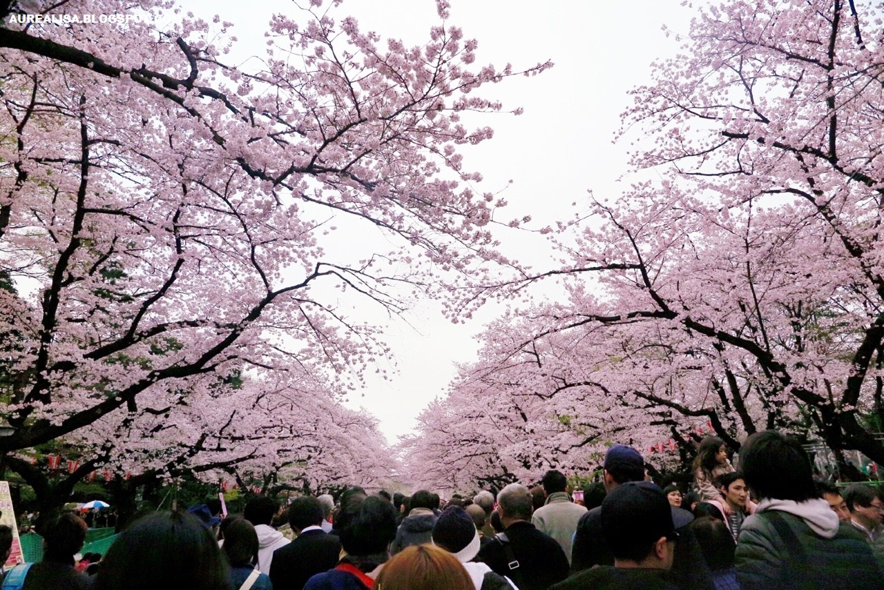 Sejarah Festival Hanami di Jepang