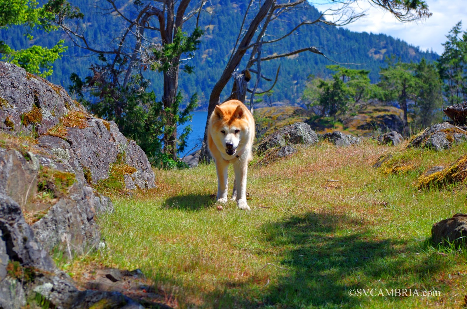 Sally wearing herself out in Home Bay, Jedediah Island, BC.