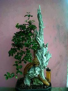 Bonsai-kayu-mati