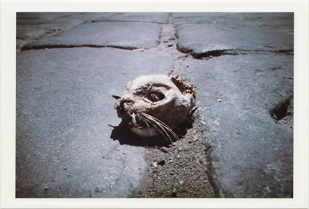 dirty photos - noah's ark fauna photo of dead cat's scull in herklion