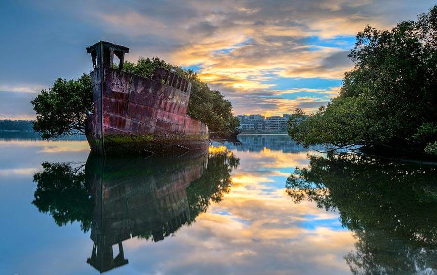 Amazing Old Floating Forest in Sydney, Australia