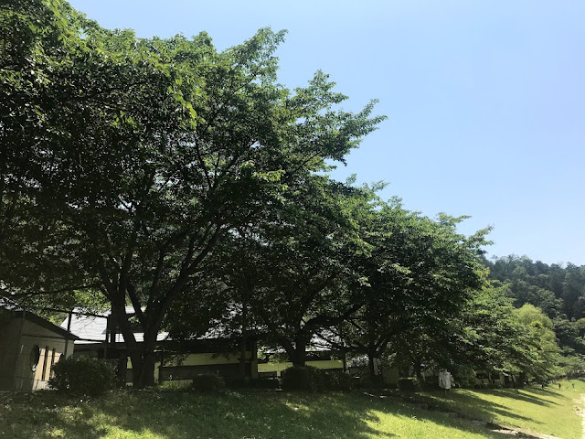 イメージ画像:森と空