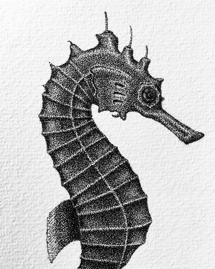 11-Seahorse-María-Lecanda-www-designstack-co