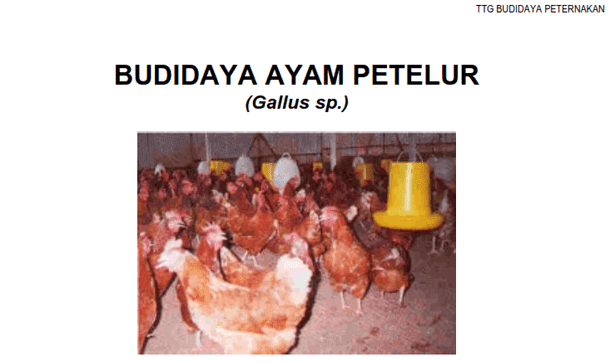 Berikut ini adalah berkas Buku Budidaya Peternakan Ayam Petelur Buku Budidaya Peternakan Ayam Petelur