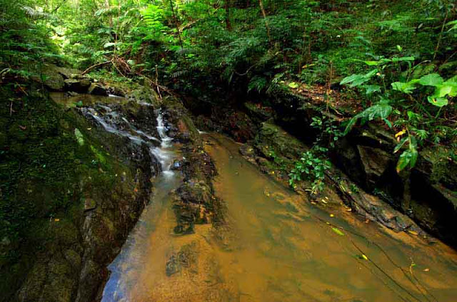 water flowing through jungle stream