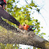 How Can You Decide About The Best Tree Surgeons In Slough?