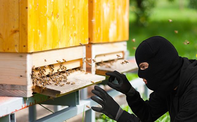 ΠΡΟΣΟΧΗ: Κλοπή μελισσιών στην Θήβα