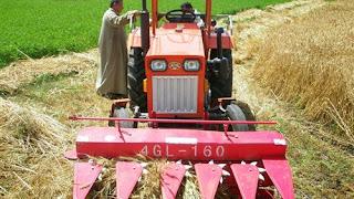 ماكينة دريس القمح تفرم مزارعا في ميت غمر
