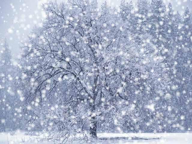 Beautiful wallpapers of snowfall