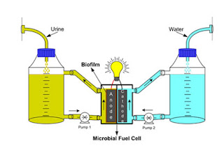 fuel cell urine water