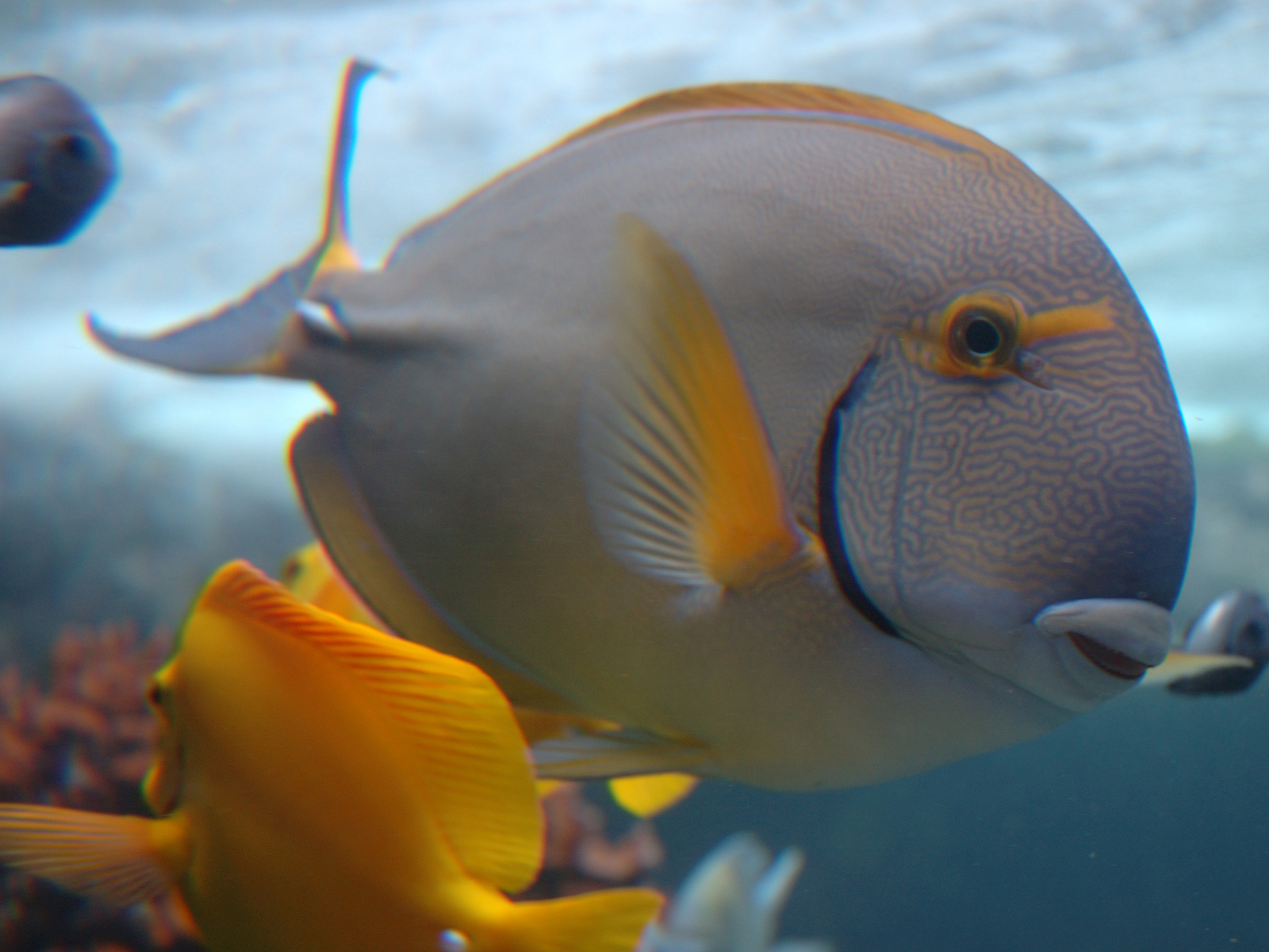 Fish Wallpapers,Fish Pictures,Fish Photos: Fish wallpapers